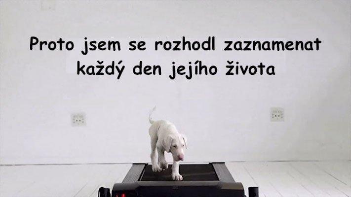 bily_psi_problemy_u_bilych_plemen_psu_boxeri_umrti_stenat_po_narozeni2