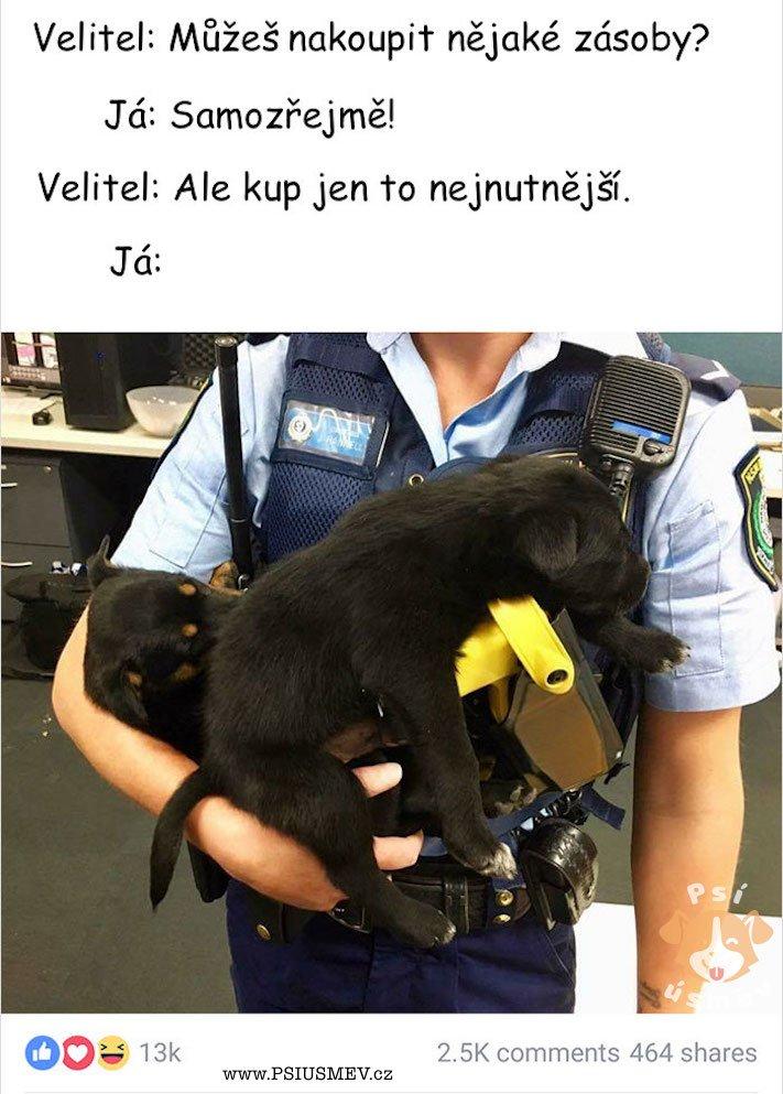 psi_u_policie_vtipne_obrazky_policejnich_psu_stenata_vycvik_policejnich_psu_psy_stene_zabavne_obrazky4