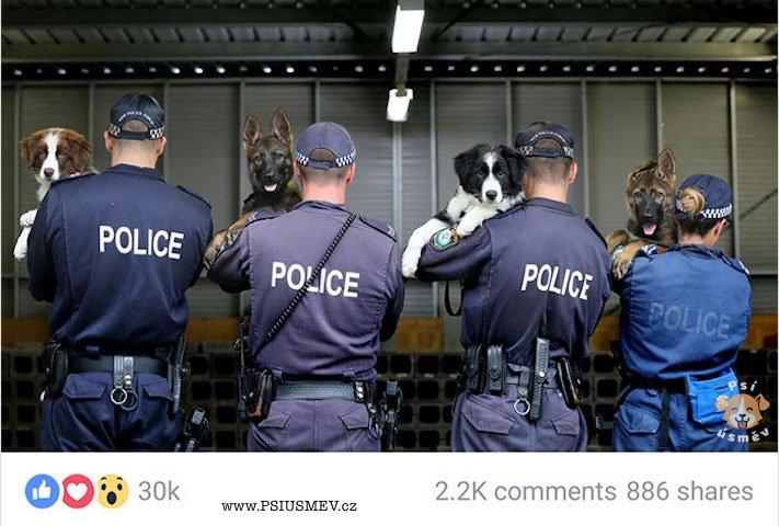 psi_u_policie_vtipne_obrazky_policejnich_psu_stenata_vycvik_policejnich_psu_psy_stene_zabavne_obrazky5