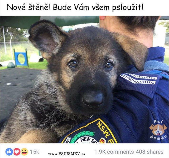 psi_u_policie_vtipne_obrazky_policejnich_psu_stenata_vycvik_policejnich_psu_psy_stene_zabavne_obrazky7