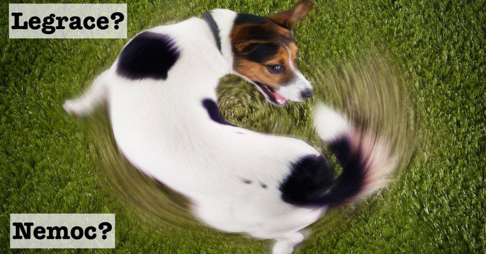 proč se pes točí dokola za ocasem je to nemoc psychycka porucha