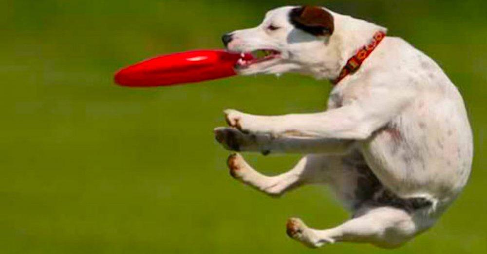 jak správně psa naučit aport výcvik a výchova psa psů psi psy pes
