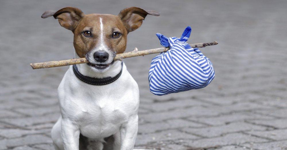čipovaní a registrace psů v české republice