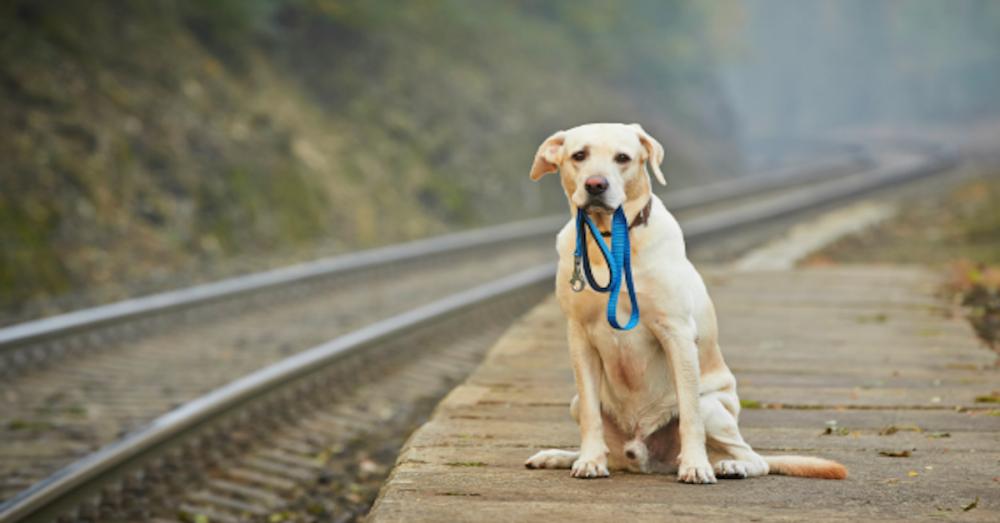 čipování registrace psů