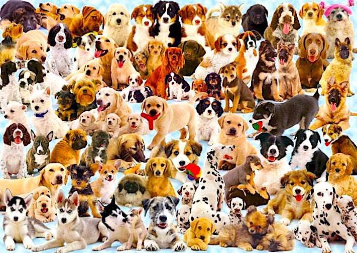 jak vybrat svého prvního psa obrázek