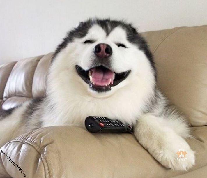 hasky_sibiřský_husky_obrázky_haskyho_hazky_plemeno_psa_štěňata_štěně_fotografie_nejlepší_nejkrásnější_psí_úsměv13