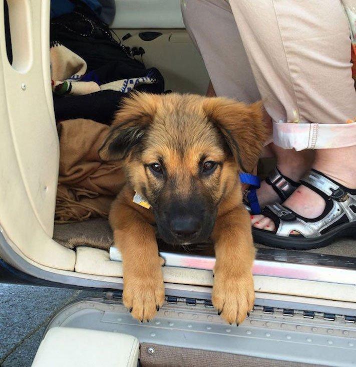 zachrana_psu_eutanazie_v_utulcich_psi_v_utulku_pes_letecky_prevoz_transport_psu_adopce_adoptovani_psa_na_dalku3