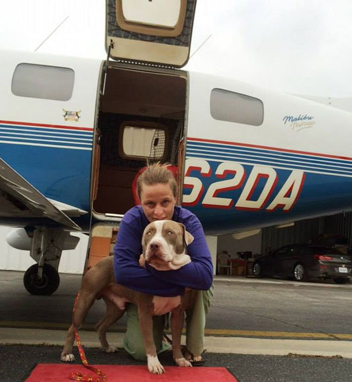 zachrana_psu_eutanazie_v_utulcich_psi_v_utulku_pes_letecky_prevoz_transport_psu_adopce_adoptovani_psa_na_dalku15