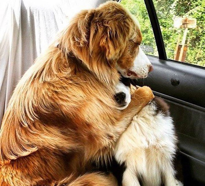 nejlepší_přítel_člověka_obrázky_psů_psi_objeti_pes_objimani_psa_psy_se_objimaji_libaji_pus_polibek_přátelství_do_konce_života2