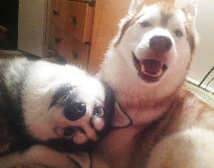 nejlepší_přítel_člověka_obrázky_psů_psi_objeti_pes_objimani_psa_psy_se_objimaji_libaji_pus_polibek_přátelství_do_konce_života3