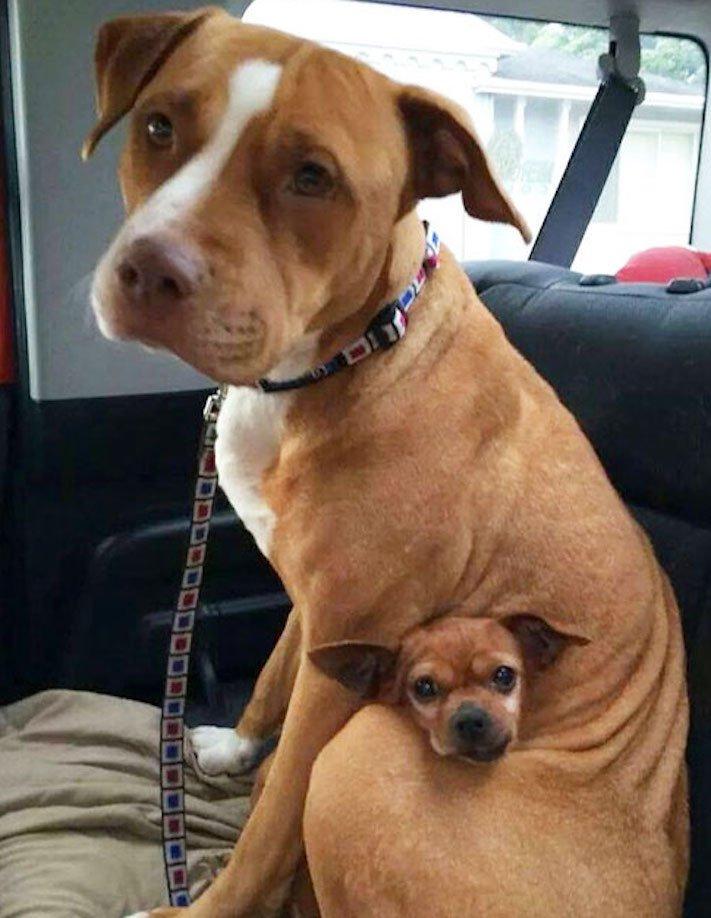 nejlepší_přítel_člověka_obrázky_psů_psi_objeti_pes_objimani_psa_psy_se_objimaji_libaji_pus_polibek_přátelství_do_konce_života4