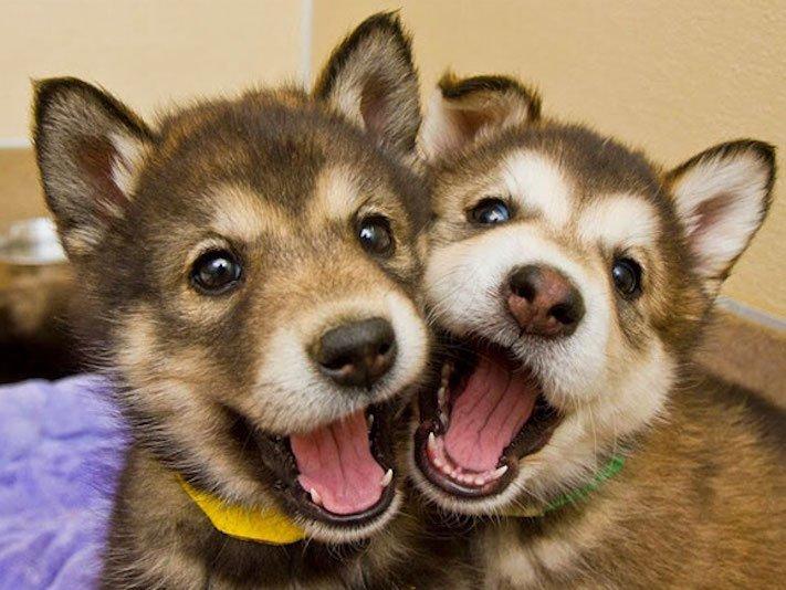nejlepší_přítel_člověka_obrázky_psů_psi_objeti_pes_objimani_psa_psy_se_objimaji_libaji_pus_polibek_přátelství_do_konce_života5