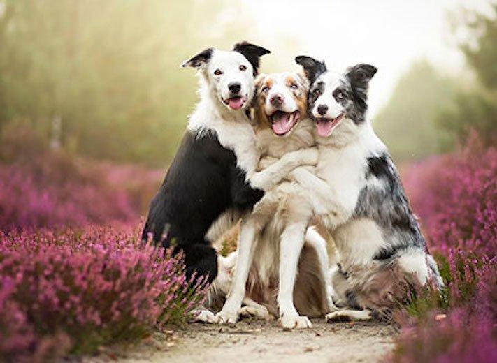nejlepší_přítel_člověka_obrázky_psů_psi_objeti_pes_objimani_psa_psy_se_objimaji_libaji_pus_polibek_přátelství_do_konce_života7