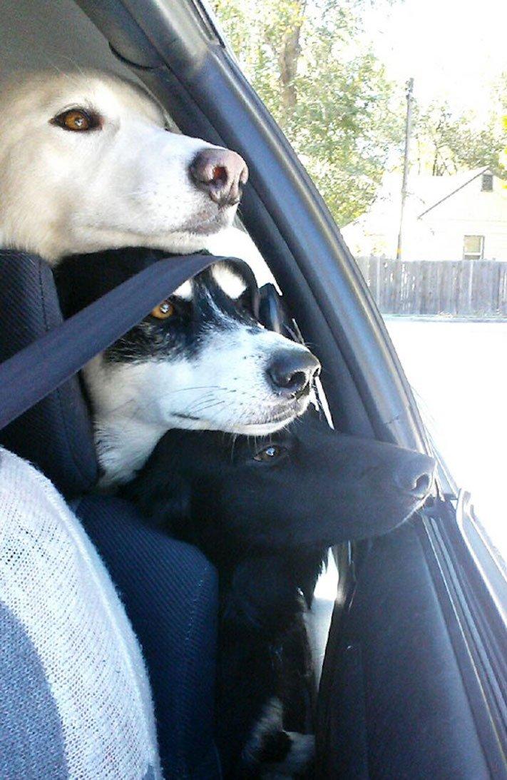 nejlepší_přítel_člověka_obrázky_psů_psi_objeti_pes_objimani_psa_psy_se_objimaji_libaji_pus_polibek_přátelství_do_konce_života8