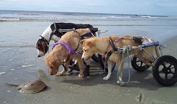 nejlepší_přítel_člověka_obrázky_psů_psi_objeti_pes_objimani_psa_psy_se_objimaji_libaji_pus_polibek_přátelství_do_konce_života9