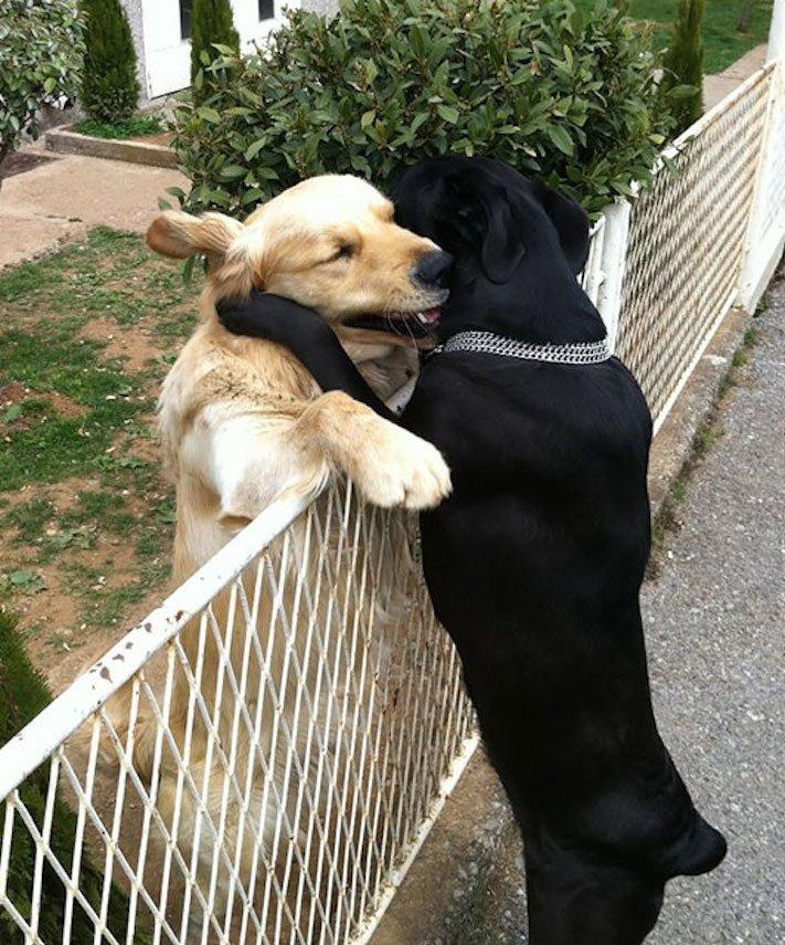 nejlepší_přítel_člověka_obrázky_psů_psi_objeti_pes_objimani_psa_psy_se_objimaji_libaji_pus_polibek_přátelství_do_konce_života11