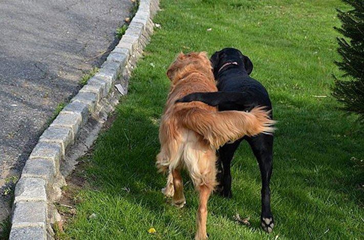 nejlepší_přítel_člověka_obrázky_psů_psi_objeti_pes_objimani_psa_psy_se_objimaji_libaji_pus_polibek_přátelství_do_konce_života12