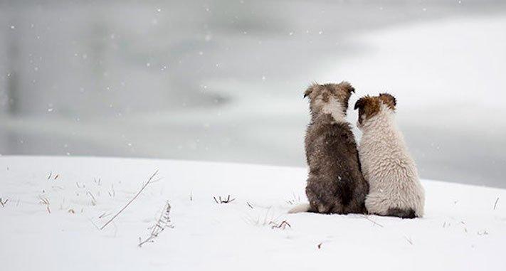 nejlepší_přítel_člověka_obrázky_psů_psi_objeti_pes_objimani_psa_psy_se_objimaji_libaji_pus_polibek_přátelství_do_konce_života15