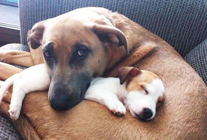 nejlepší_přítel_člověka_obrázky_psů_psi_objeti_pes_objimani_psa_psy_se_objimaji_libaji_pus_polibek_přátelství_do_konce_života16
