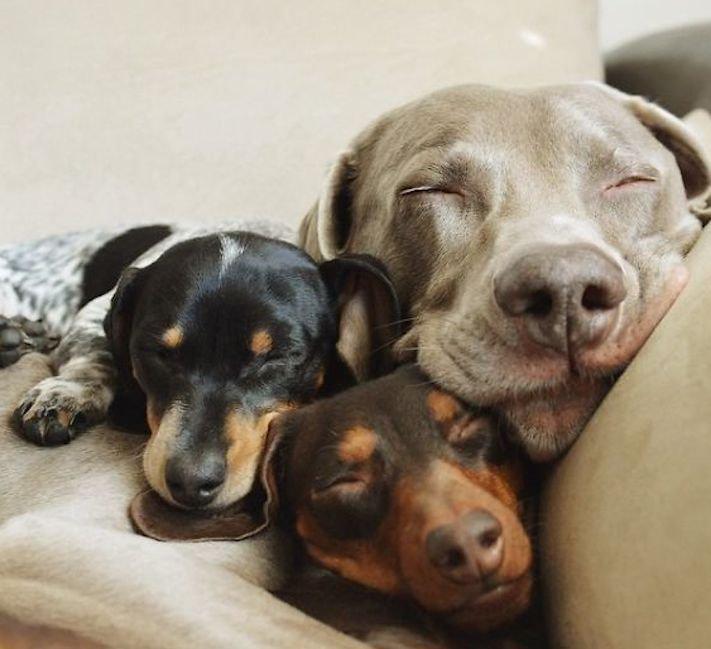 nejlepší_přítel_člověka_obrázky_psů_psi_objeti_pes_objimani_psa_psy_se_objimaji_libaji_pus_polibek_přátelství_do_konce_života19