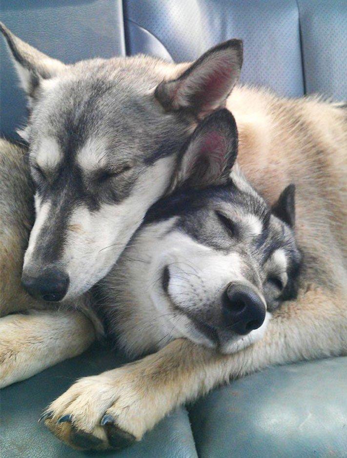 nejlepší_přítel_člověka_obrázky_psů_psi_objeti_pes_objimani_psa_psy_se_objimaji_libaji_pus_polibek_přátelství_do_konce_života20
