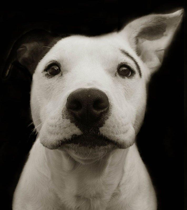 adopce_psa_z_útulku_adoptování_zvířat_pořízení_psa_bez_pp_množitelé_pomoc_psům_obrázky_fotografie_psů_z_útulku1