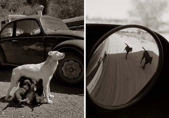 adopce_psa_z_útulku_adoptování_zvířat_pořízení_psa_bez_pp_množitelé_pomoc_psům_obrázky_fotografie_psů_z_útulku2