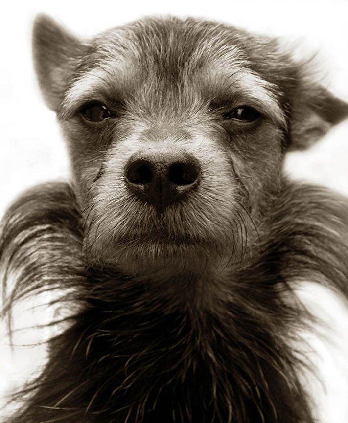 adopce_psa_z_útulku_adoptování_zvířat_pořízení_psa_bez_pp_množitelé_pomoc_psům_obrázky_fotografie_psů_z_útulku3