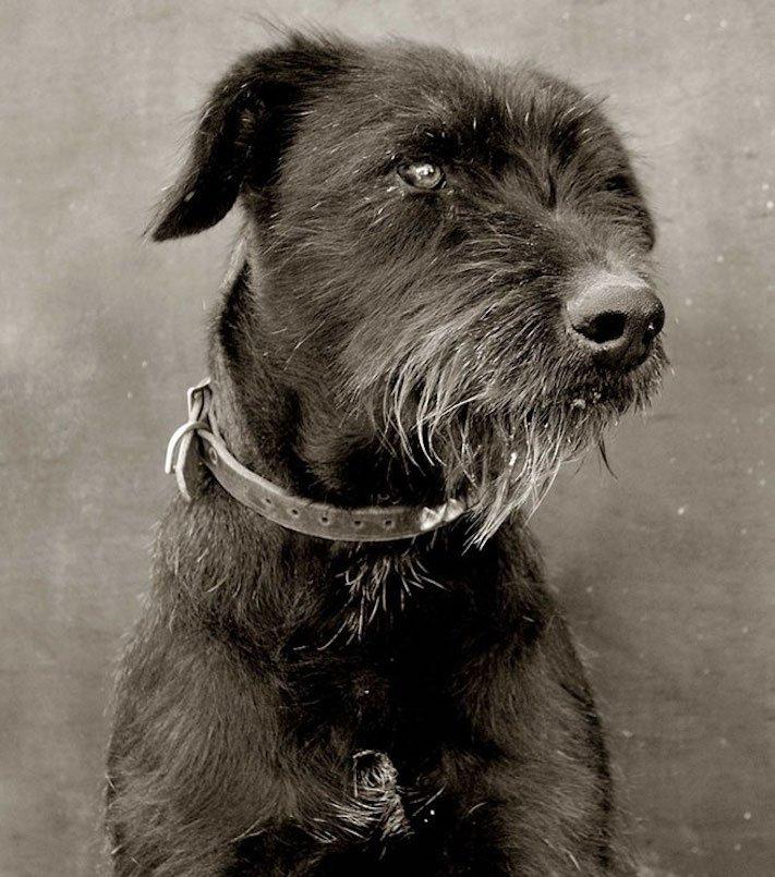 adopce_psa_z_útulku_adoptování_zvířat_pořízení_psa_bez_pp_množitelé_pomoc_psům_obrázky_fotografie_psů_z_útulku5