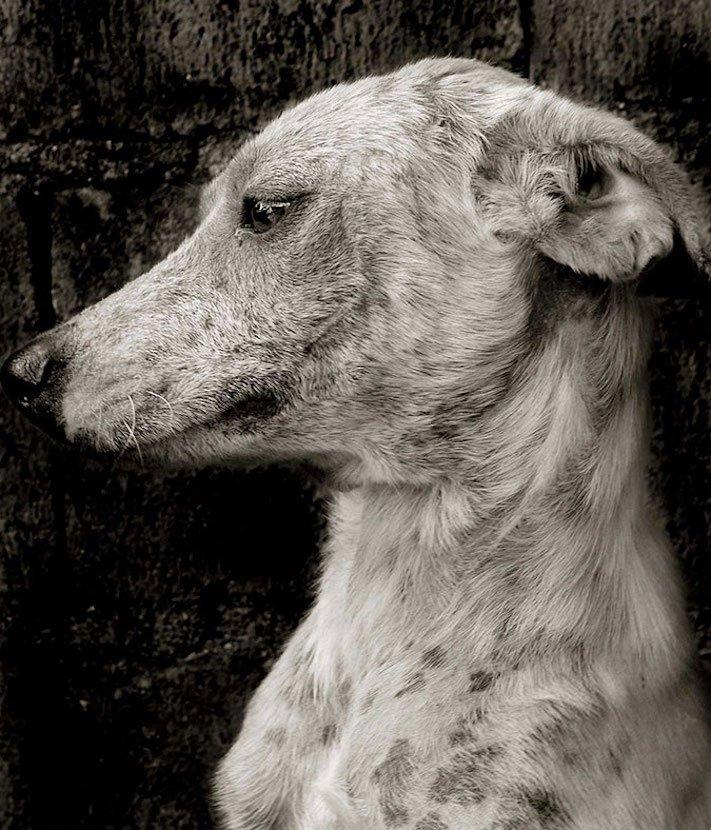 adopce_psa_z_útulku_adoptování_zvířat_pořízení_psa_bez_pp_množitelé_pomoc_psům_obrázky_fotografie_psů_z_útulku8