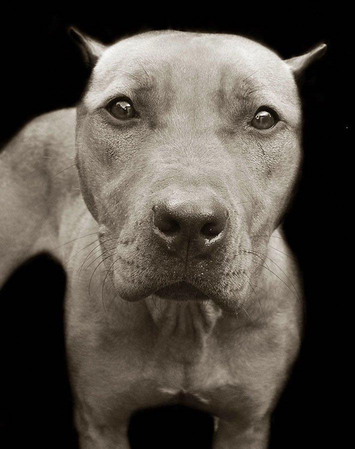 adopce_psa_z_útulku_adoptování_zvířat_pořízení_psa_bez_pp_množitelé_pomoc_psům_obrázky_fotografie_psů_z_útulku9