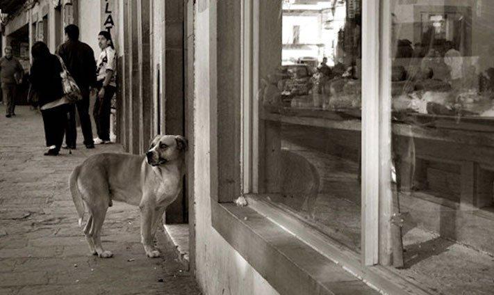 adopce_psa_z_útulku_adoptování_zvířat_pořízení_psa_bez_pp_množitelé_pomoc_psům_obrázky_fotografie_psů_z_útulku10