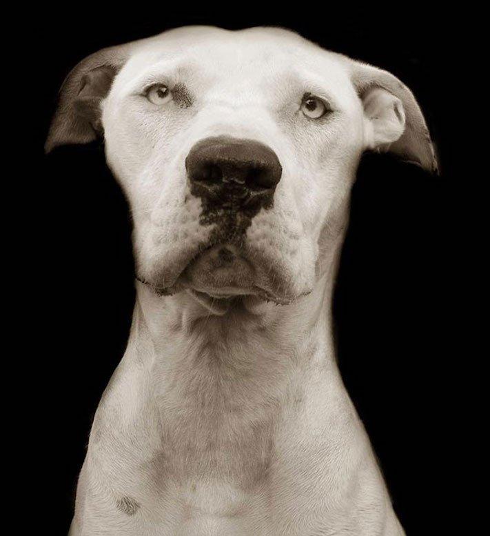 adopce_psa_z_útulku_adoptování_zvířat_pořízení_psa_bez_pp_množitelé_pomoc_psům_obrázky_fotografie_psů_z_útulku11