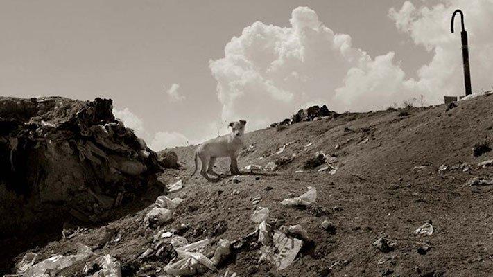adopce_psa_z_útulku_adoptování_zvířat_pořízení_psa_bez_pp_množitelé_pomoc_psům_obrázky_fotografie_psů_z_útulku12