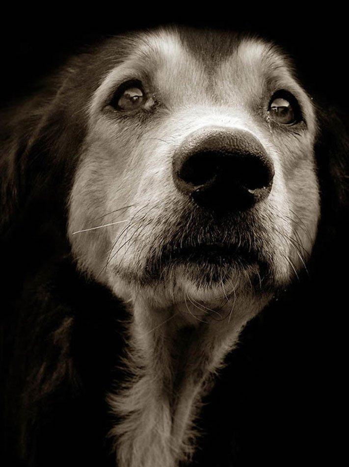 adopce_psa_z_útulku_adoptování_zvířat_pořízení_psa_bez_pp_množitelé_pomoc_psům_obrázky_fotografie_psů_z_útulku14