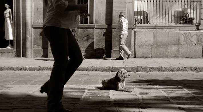 adopce_psa_z_útulku_adoptování_zvířat_pořízení_psa_bez_pp_množitelé_pomoc_psům_obrázky_fotografie_psů_z_útulku15