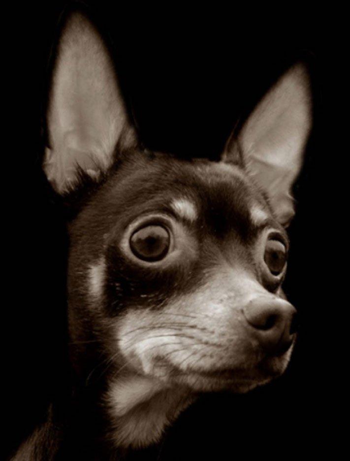 adopce_psa_z_útulku_adoptování_zvířat_pořízení_psa_bez_pp_množitelé_pomoc_psům_obrázky_fotografie_psů_z_útulku16