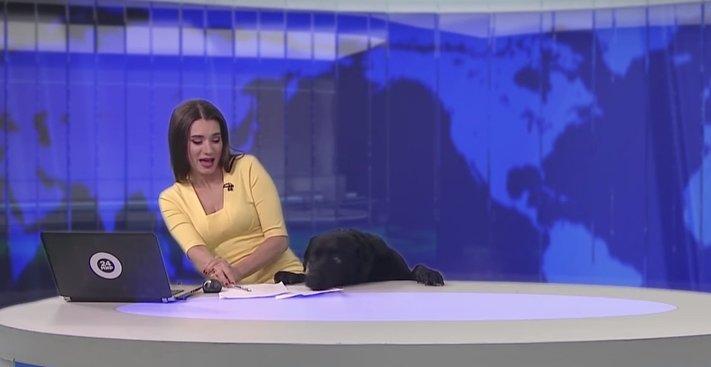 pes_v_zivem_televiznim_vysilani_tv_pes2