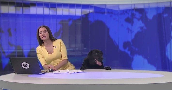 pes_v_zivem_televiznim_vysilani_tv_pes3