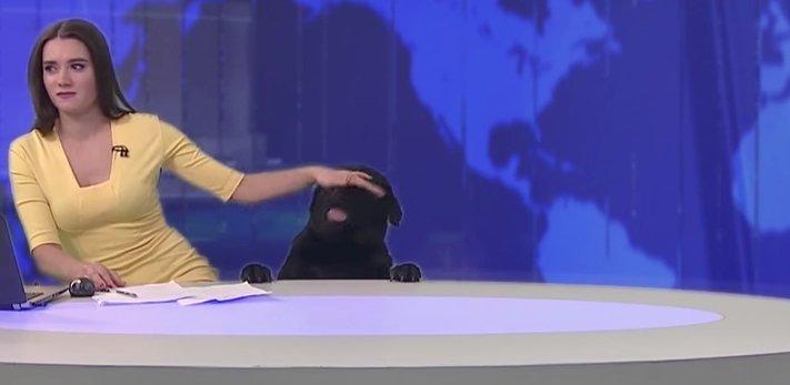 pes_v_zivem_televiznim_vysilani_tv_pes4