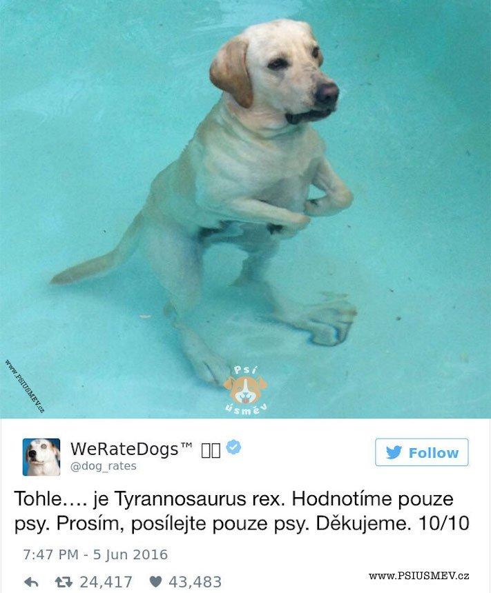 zábavné_obrázky_psů_kteří_nevypadají_jako_pes1
