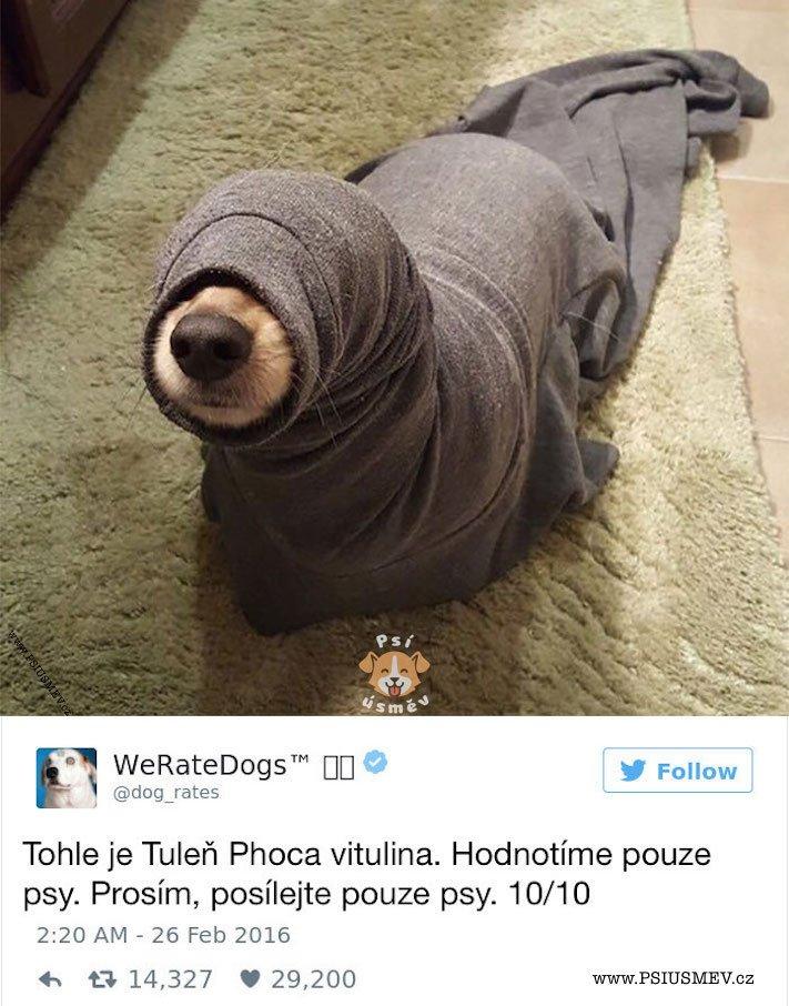 zábavné_obrázky_psů_kteří_nevypadají_jako_pes2