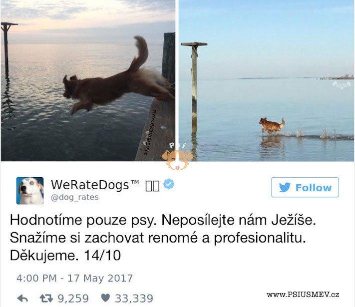 zábavné_obrázky_psů_kteří_nevypadají_jako_pes3