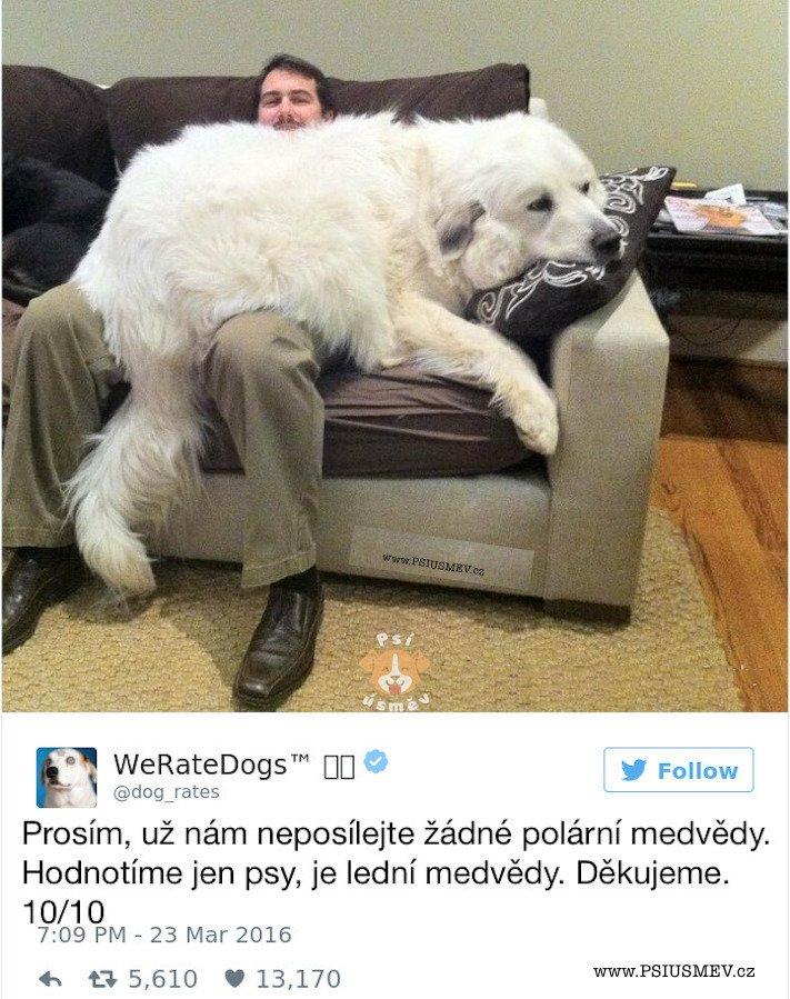 zábavné_obrázky_psů_kteří_nevypadají_jako_pes4