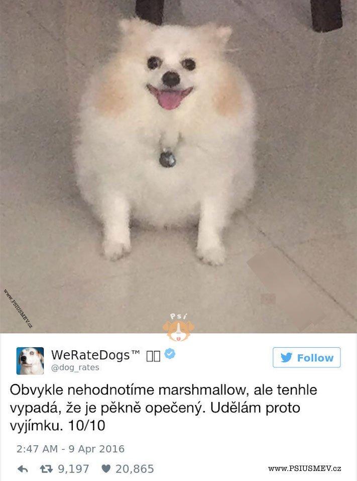 zábavné_obrázky_psů_kteří_nevypadají_jako_pes5