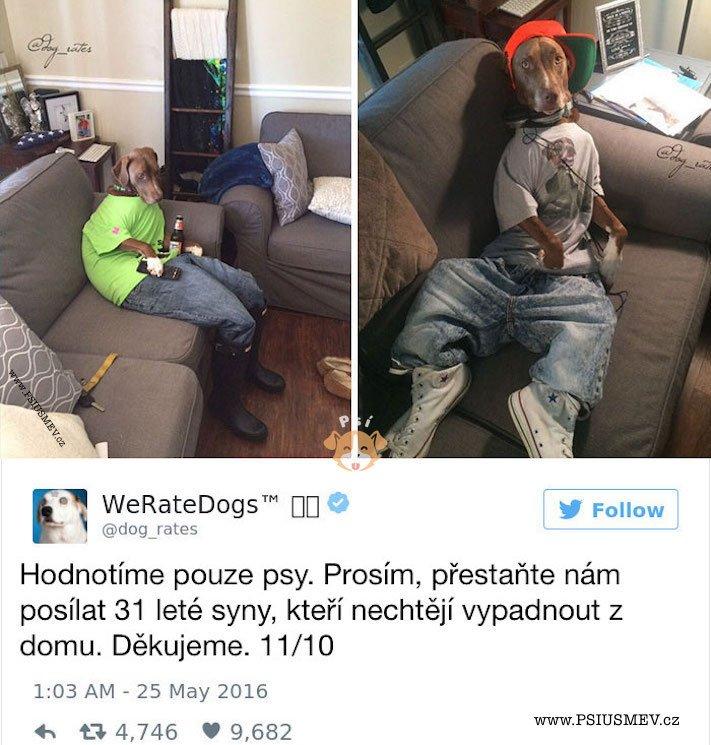 zábavné_obrázky_psů_kteří_nevypadají_jako_pes6