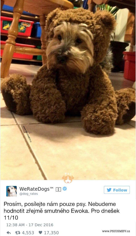 zábavné_obrázky_psů_kteří_nevypadají_jako_pes8