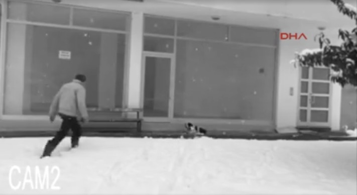 pomoc_psum_v_zime_mrazu_jak_zachranit_psy_v_zime1