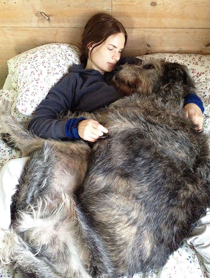 největší_plemena_psů_na_světě_obří_psí_plemena_největší_psi_obrázky7