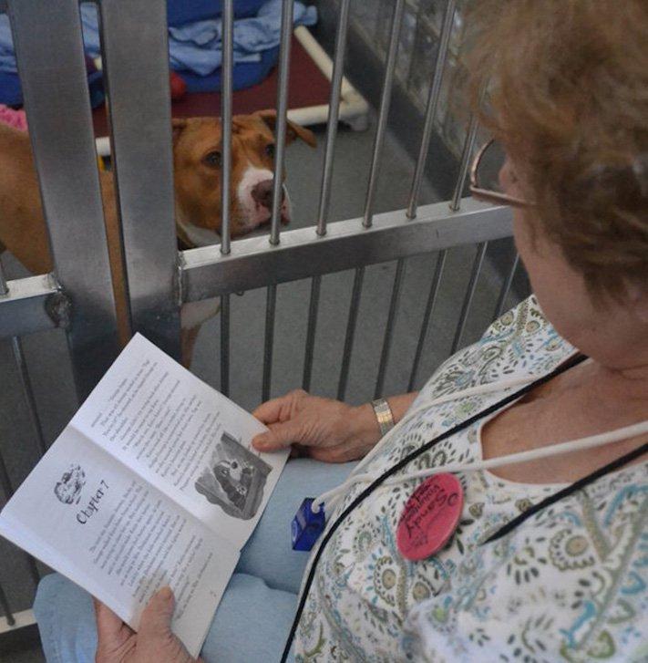 pomoc_psům_v_útulku_jak_pomoci_psovi_z_útulku_dobrovolnictví_útulek2